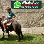 Renta Ponys – LIENZO CHARRO DE CONSTITUYENTES