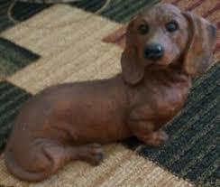 dachshund kijiji in ontario
