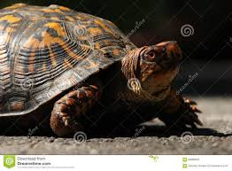 21 Turtle Fence Post Photos Free Royalty Free Stock Photos From Dreamstime