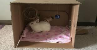 diy cardboard box toys for your rabbit