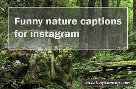 best funny nature captions and quotes for instagram
