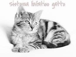 Sistema linfatico cane gatto Elicats.it