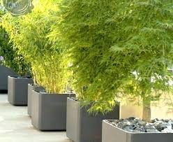 tall container plants best potted for