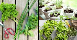 how to grow a space saving herb garden