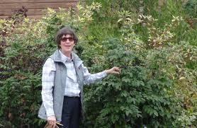 rain garden grow best plants