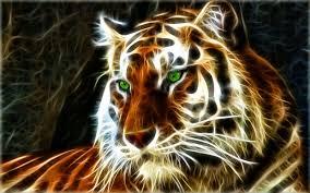 مجموعة من خلفيات و صور النمور 2015 Wallpaper Tiger Hd ايجي لايف