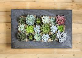 creative ways to make a succulent wall