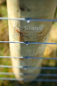 No 8 Fencing Wire And 7 Wire Farm Fence Post New Zealand Nz Stock Photo From New Zealand Nz Photos And Stock Photography By Rob Suisted
