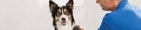 dog grooming faq health vaccination