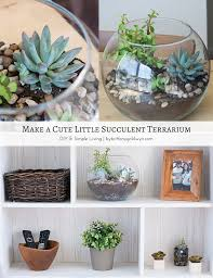 make a cute little succulent terrarium