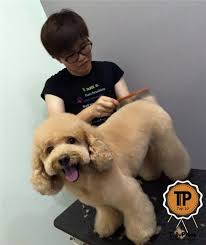 Groomers on Invaber - Yin Mobile Pets Grooming Service, Team ...