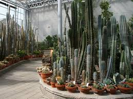 cactus garden landscaping ideas pdf