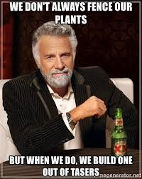 We Don T Always Fence Our Plants But When We Do We Build One Out Of Tasers The Most Interesting Man In The World Meme Generator