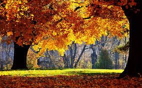 fall autumn desktop wallpapers top