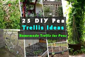 25 Diy Pea Trellis Ideas For Your Garden Gardenoid