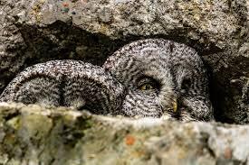 Eule Vogel Natur - Kostenloses Foto auf Pixabay
