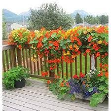 Creative Farmer Flower Seeds Nasturtiums Home Depot Flower Seeds For Planting Garden Flower Seeds Pack Amazon In Garden Outdoors