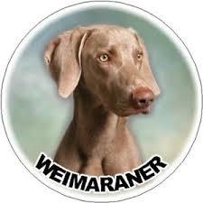 2 Weimaraner Car Stickers By Starprint Ebay