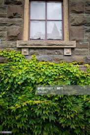 Ivy Stone Wall And Window High-Res Stock Photo - Getty Images