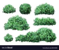 Boxwood Fence Hedges Vector Images 33
