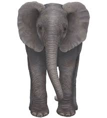 Baby Elephant Wall Decal Safari Wall Decals Wall Decals For Kids