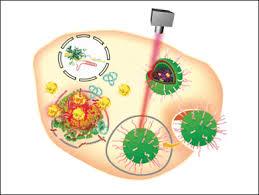 Gold Nanoparticles for the Delivery of CRISPR-Cas9 Therapeutics ...