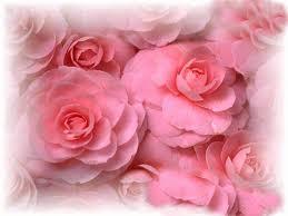 صور وردة روز ميكساتك