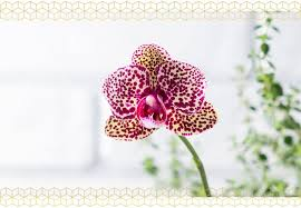 how to care for orchids ftd