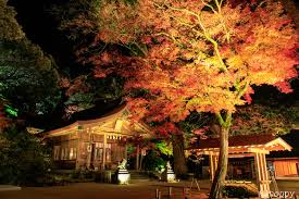宝満宮竈門神社 紅葉ライトアップ 3 - 写真共有サイト「フォト蔵」