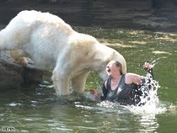 Polar Bear Attacks Woman At Berlin Zoo Cnn Com