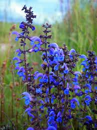 صور ورد أزرق طبيعي رائع الجمال روزبيديا