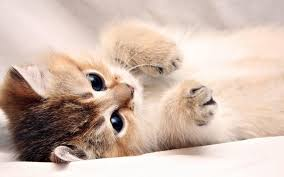 baby cats wallpapers wallpaper cave