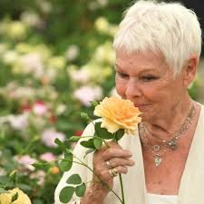 Dame Judi Dench has rose named after ...