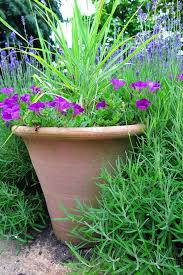 low maintenance garden pots