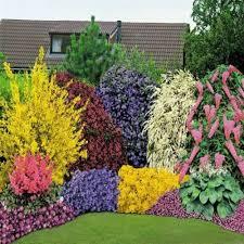 evergreen plants co uk