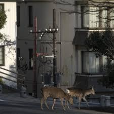 wild animals venture into locked-down ...