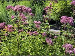 backyard garden reviews austin texas