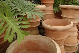 planters pots eye of the day garden