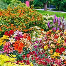 erfly garden kit 30 perennials