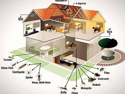 Kiran Pest Control Services, Singasandra - Residential Pest Control Services  in Bangalore - Justdial