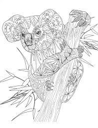 Koala Amazing Animals Colouring Pages By Joenay Inspirations