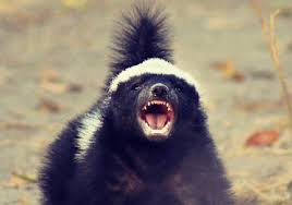 what does honey badger mean memes by