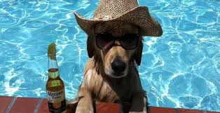 18 Dogs Who Make Us Miss Summer - DogBuddy Blog