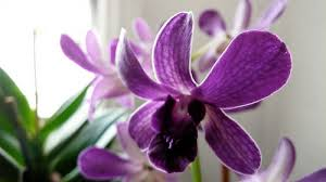 recycled orchids as holiday gifts