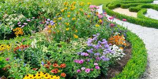 best flowers to grow in dubai