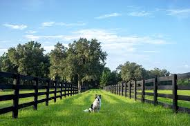 The Best Large Area Wireless Dog Fences And Containment Systems Pet Lover Guy