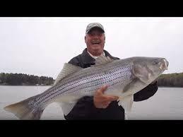 biggest lake lanier striper on you