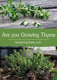 garden up green are you growing thyme
