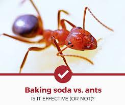 does baking soda kill ants is it