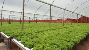 کارگاه آموزشی کاشت هیدروپونیک محصولات گلخانه ای (صیفی جات و توت ...